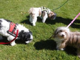 Hundepension, Hundebetreuung, Casa Happy in Haan