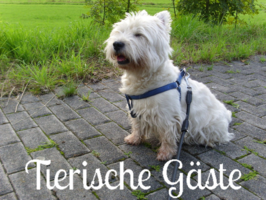 Hundepension, Hundebetreuung, Casa Happy in Haan, Hundehotel
