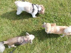 Hundehotel Casa Happy in Haan, Urlaubsaufenthalt für Hund Haan, Hundestation Haan