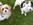 Gäste in der Hundepension Casa Happy
